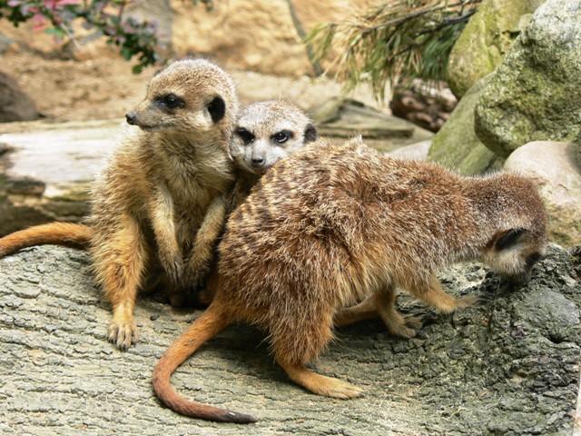 Ogród Zoologiczny w Gdańsku. Wycieczki szkolne – Hit The Road Travel