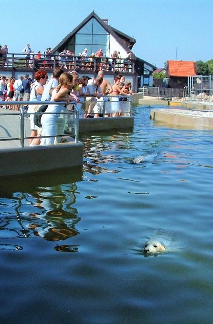 Hel, Fokarium Stacji Morskiej Instytutu Oceanografii Uniwersytetu Gdańskiego. Wycieczka doTrójmiasta – Hit The Road Travel