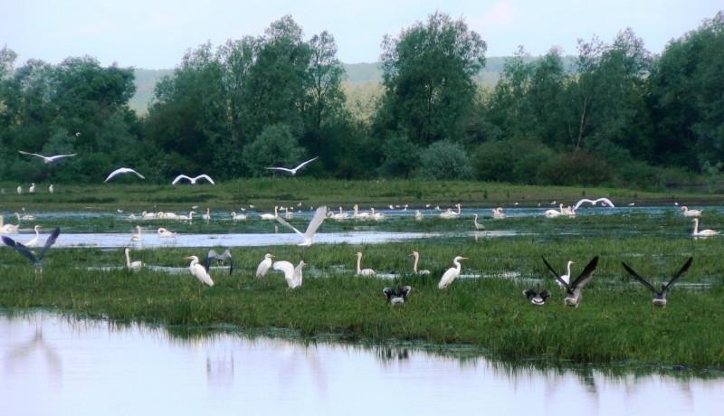 Rozlewiska rzeki Postomia naterenie Parku Narodowego Ujście Warty. Wycieczki ornitologiczne – Hit The Road Travel
