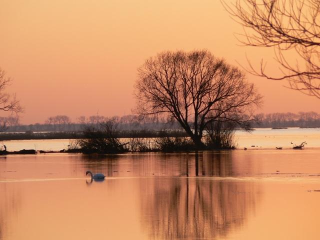 Rozlewisko zimą wParku Narodowym Ujście Warty. Wycieczki ornitologiczne – Hit The Road Travel