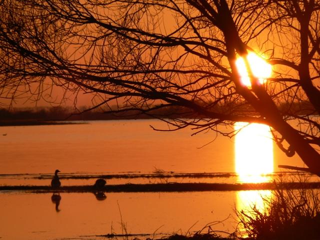 Zachód słońca wParku Narodowym Ujście Warty