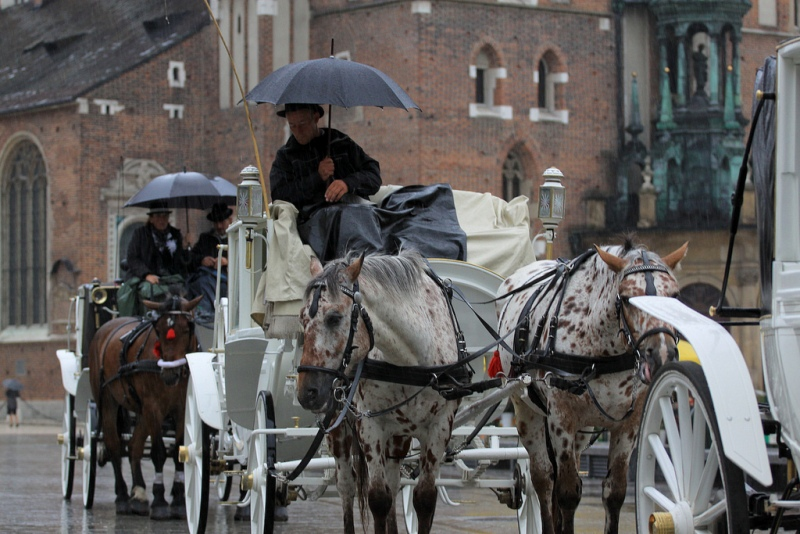 Krakowskie dorożki. Wycieczka doKrakowa – Hit The Road Travel